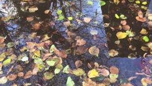 Осень опять надевается с рукавов